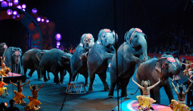 Best Circuses in the World